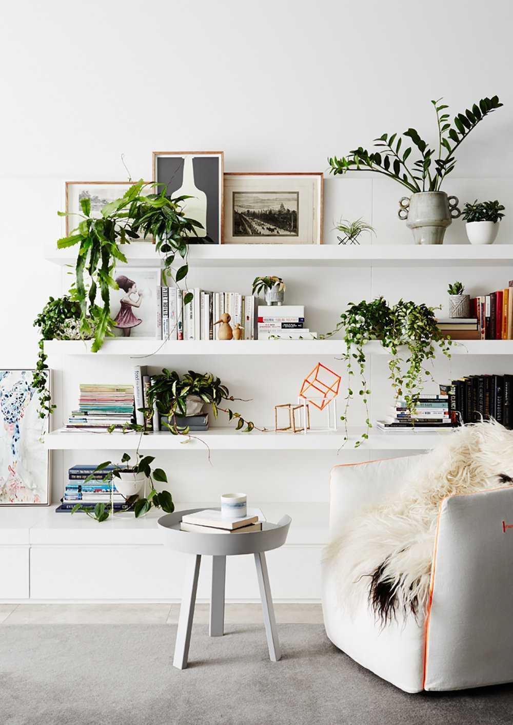 Rak hias pada umumnya hanya diisi dengan bingkai foto, action figure, atau koleksi buku. Tak ada salahnya memilih tanaman hijau berukuran kecil seperti kaktus mini untuk memberikan nuansa hijau ke dalam ruang tamu Anda.