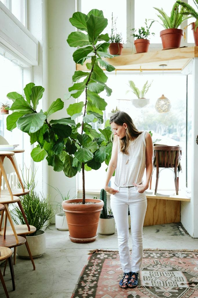 3. Perhatikan proporsi atau skala ruang. Pilih tanaman yang tidak hanya cocok dengan ukuran ruangan, tetapi juga tempat yang sudah Anda siapkan. Tanaman yang terlalu besar dapat memakan banyak ruang, sementara tanaman kecil dapat terlihat tidak bernilai jika ditempatkan pada ruangan berskala besar. Salah satu kiatnya adalah pilih tanaman yang tumbuh di halaman Anda agar tercipta keterkaitan dengan luar rumah.