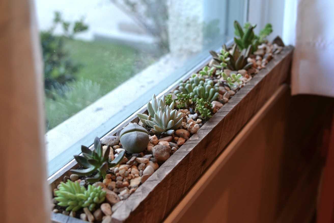 Untuk tanaman di bingkai jendela, cobalah bak sempit yang dapat menampung beberapa tanaman kecil atau deretan pot kecil dengan berbagai ketinggian. Gunakan pot atau wadah yang mampu menyerap air yang mengalir melalui lubang saluran pembuangan di bagian dasar untuk mencegah kerusakan kusen jendela Anda.