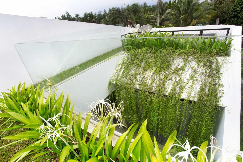 Keindahan juntaian lee kuan yew, tanaman rambat yang menyejukkan (Sumber: arsitag.com)