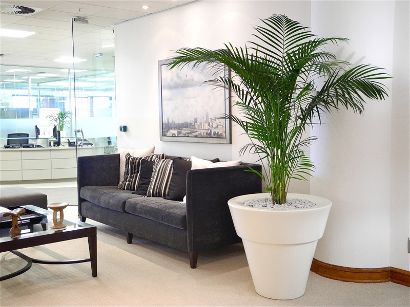 Pot tanaman berukuran sama besar dengan kursi (Sumber: mghomehealth.com)