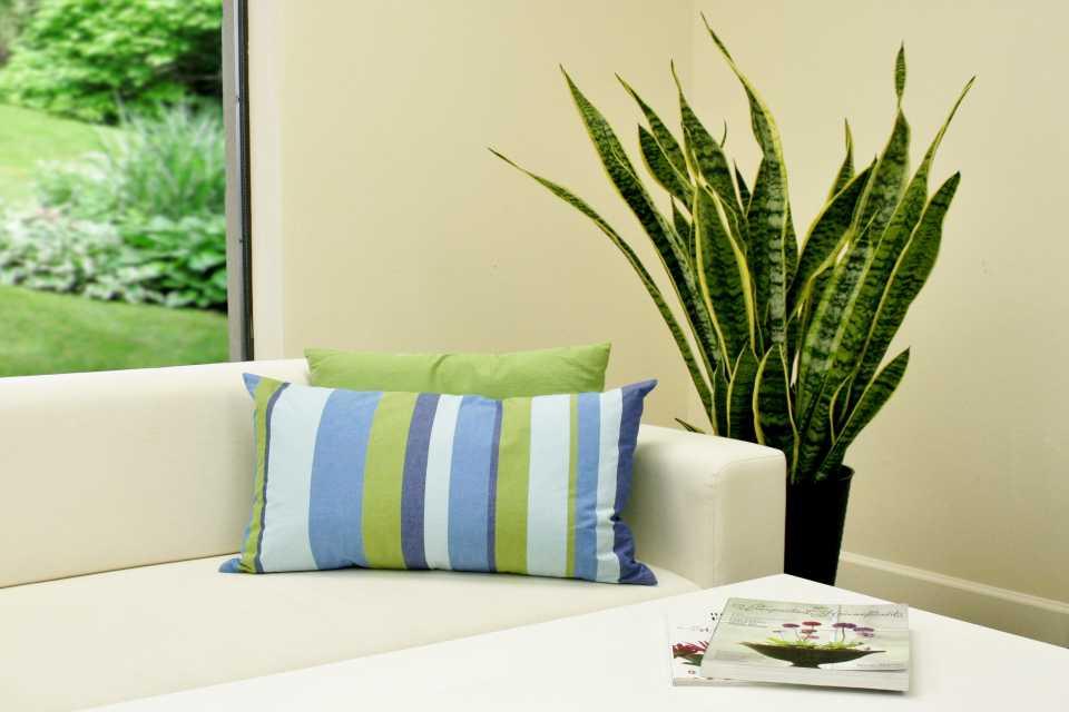 Pot tanaman di sudut ruangan (Sumber: greenhousegrower.com)