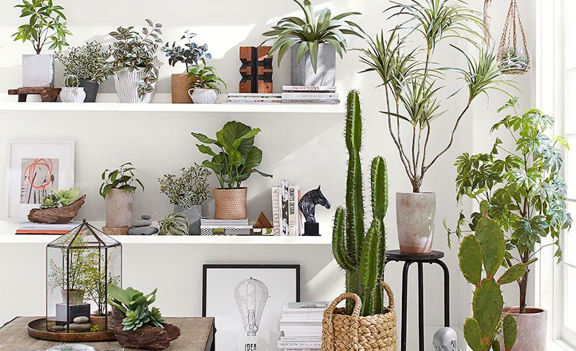 Menyusun tanaman di atas rak dinding (Sumber: potterybarn.com)