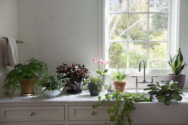 Pastikan tanaman mendapatkan sinar matahari yang cukup (Sumber: decoraid.com)