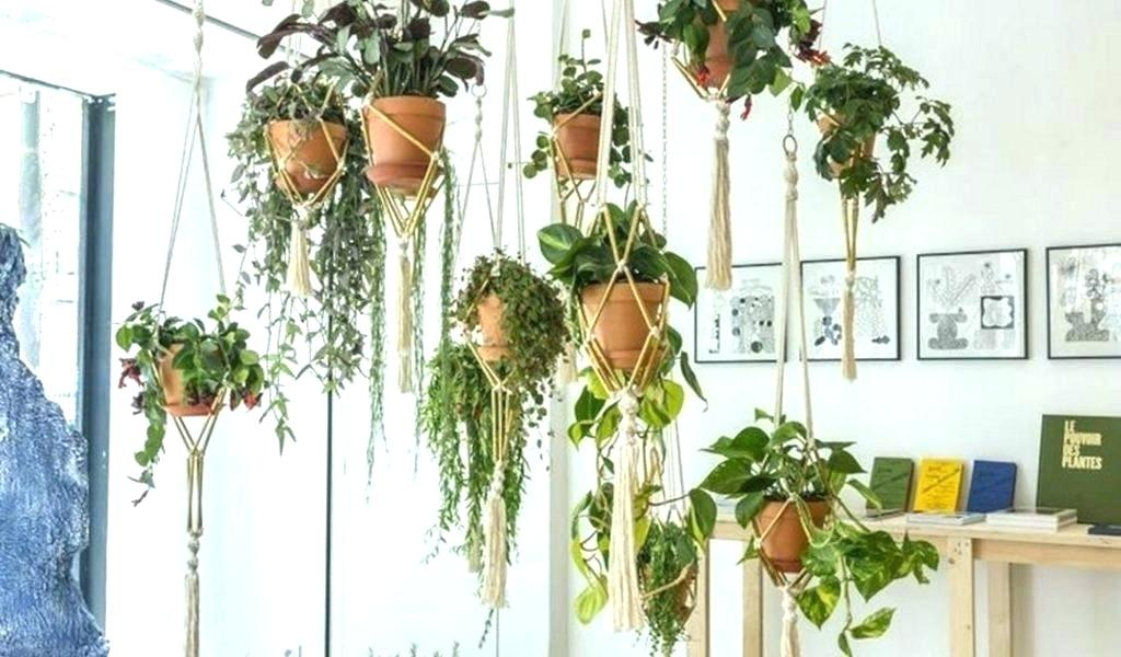 Pot-pot bergantung untuk menyimpan koleksi tanaman Anda (Sumber: mrigayadham.co)