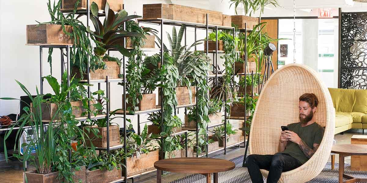 Jadikan koleksi tanaman anda sebagai room divider (Sumber: greenerynyc.com)