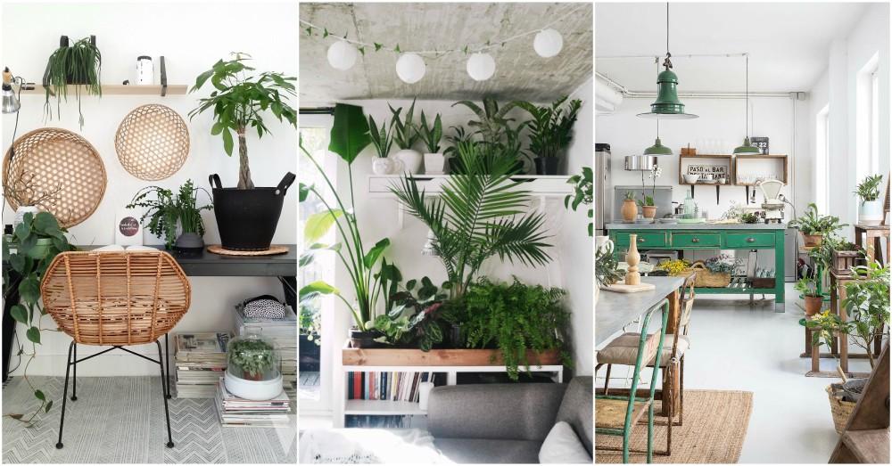 8 Ide Desain Terkini untuk Menata Koleksi Tanaman Interior Rumah Anda | Foto artikel Arsitag
