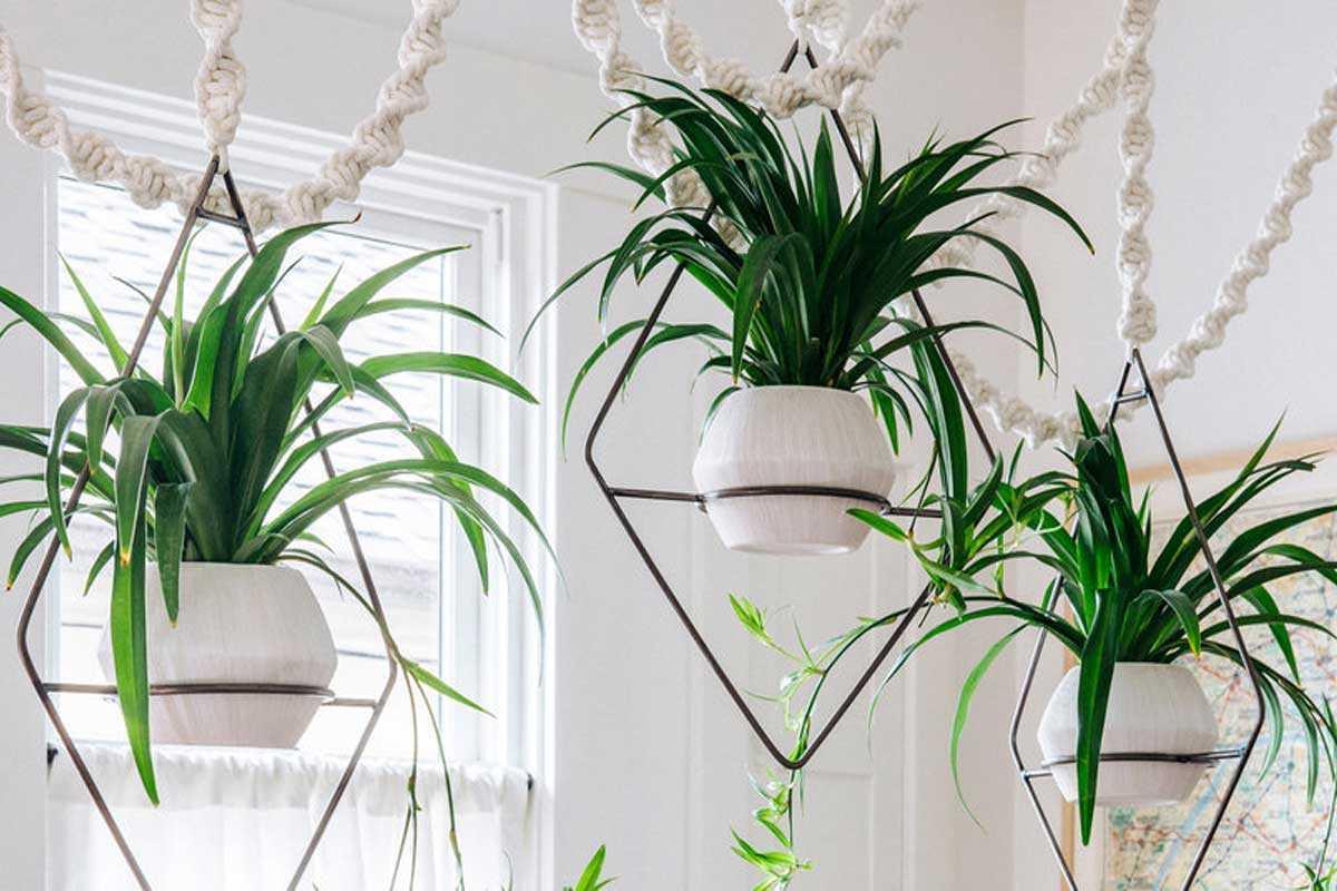 Desain tanaman gantung dengan rangka geometris, karya Thomas J. Story // sunset.com
