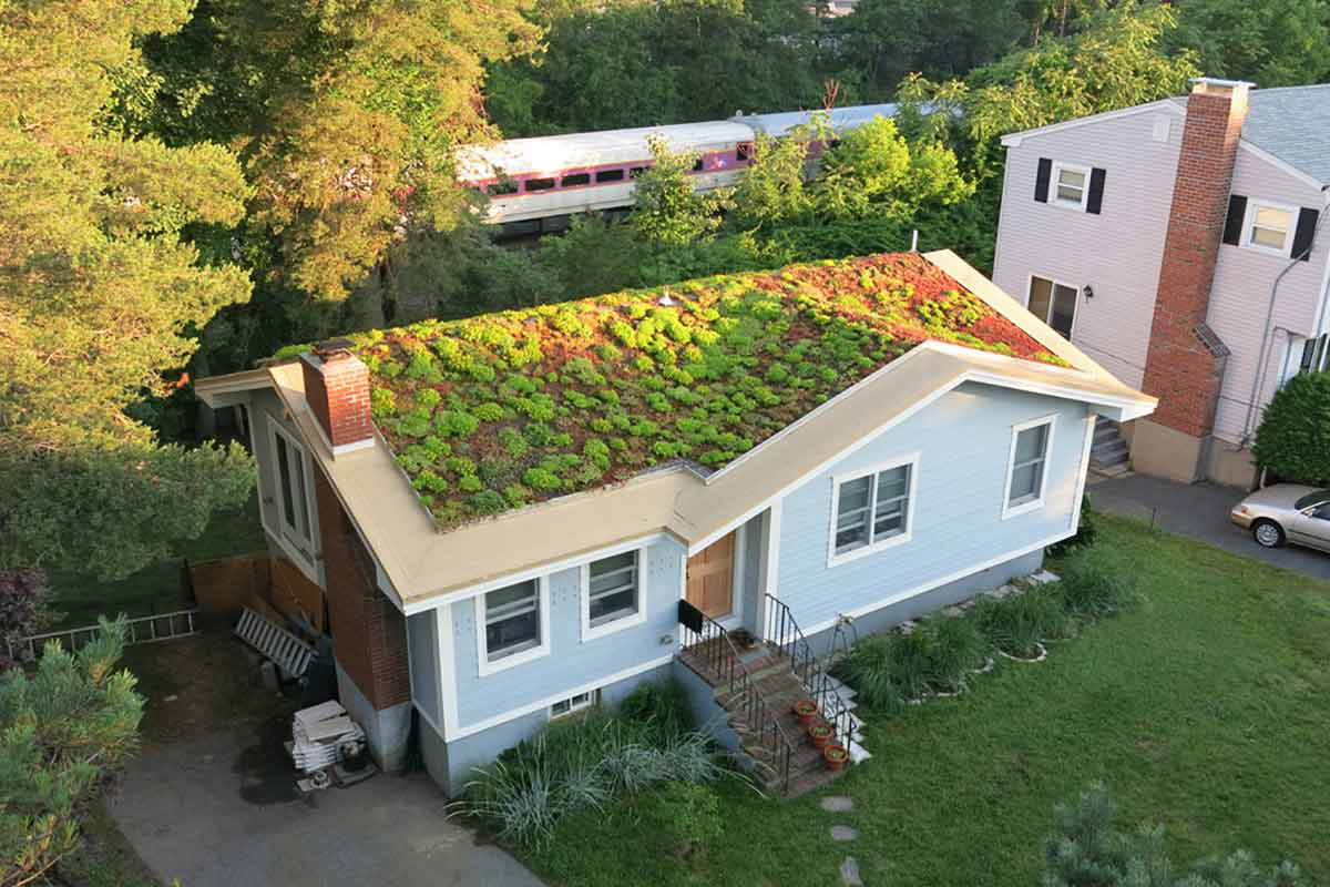 Atap hijau di atas genteng, karya Recover Green Roofs // bostonmagazine.com