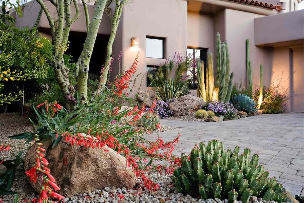 Taman kaktus karya Marc Vargas // dflaz.com