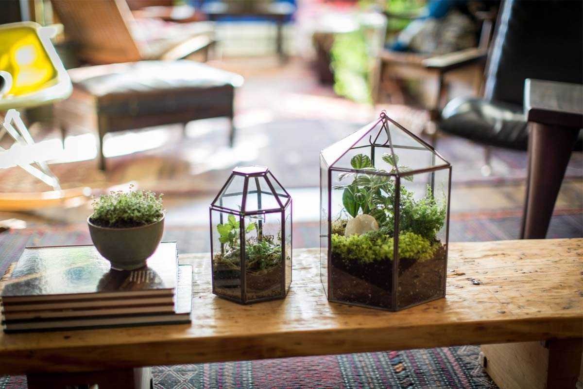 Terarium karya Sprout Home, via amuse.vice.com