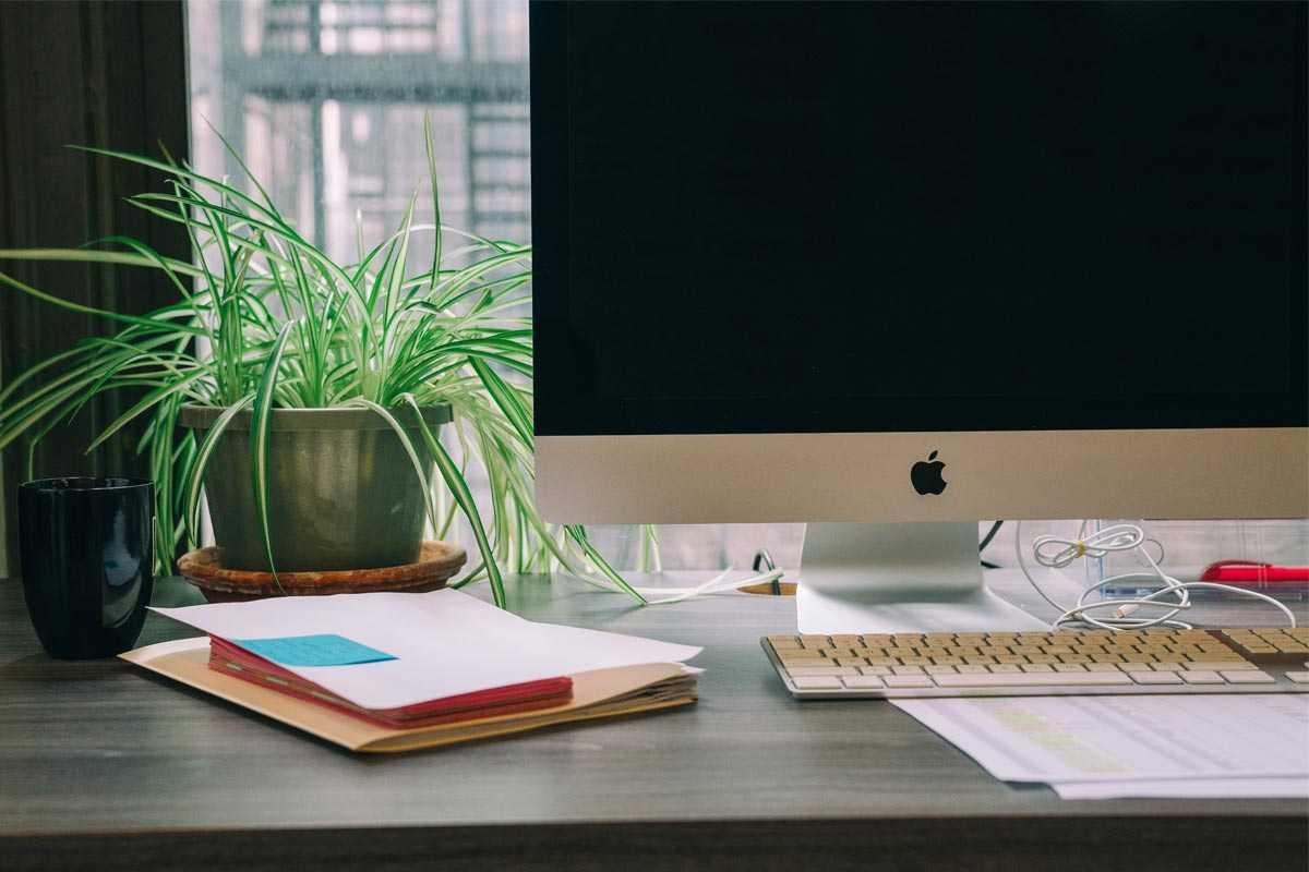 Pilihan Tanaman Mungil yang Cocok untuk Menghias Meja Kerja Anda | Foto artikel Arsitag