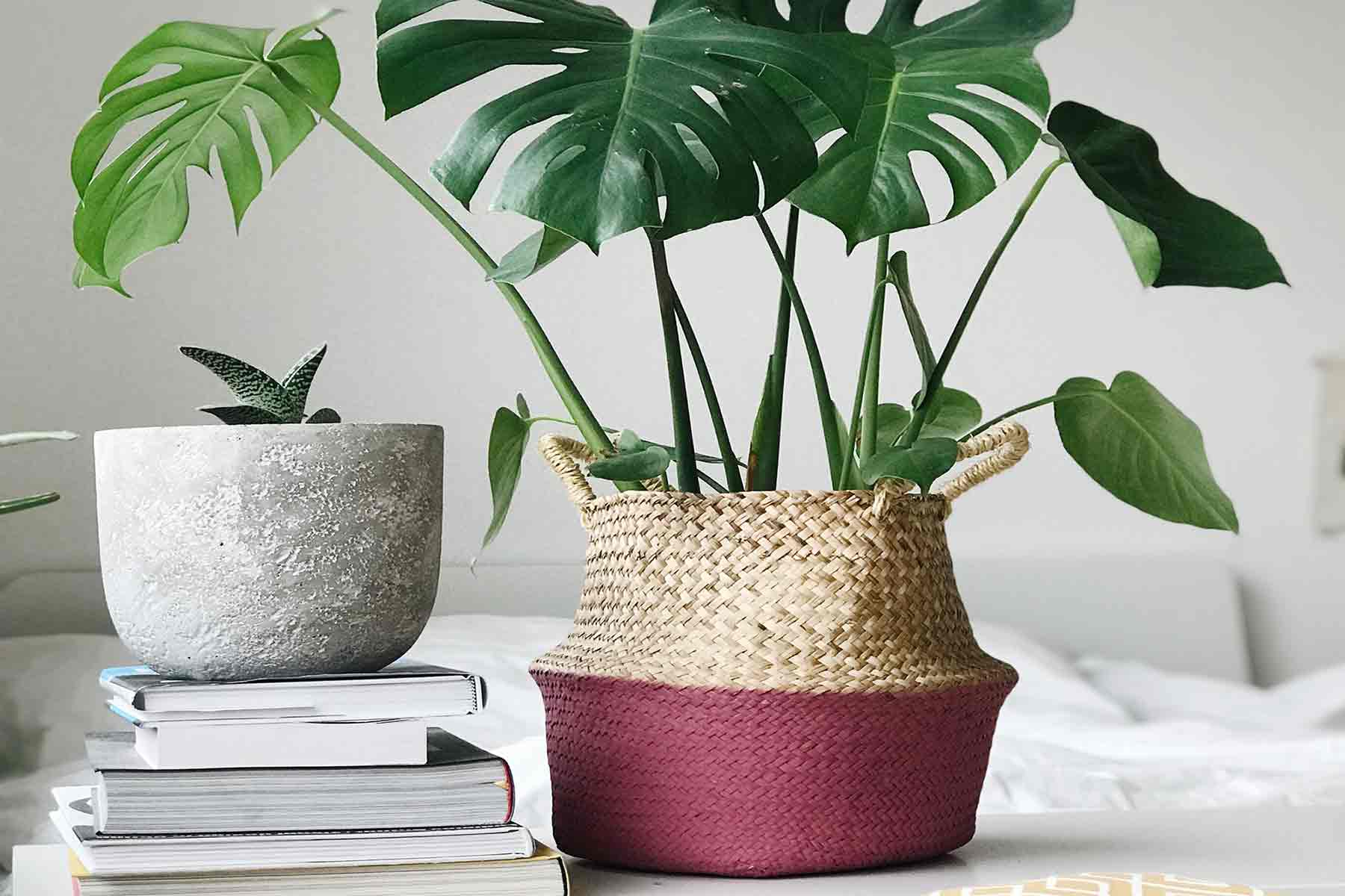 Cara Memilih Pot yang Pas untuk Mempercantik Dekorasi Tanaman Hias Anda | Foto artikel Arsitag