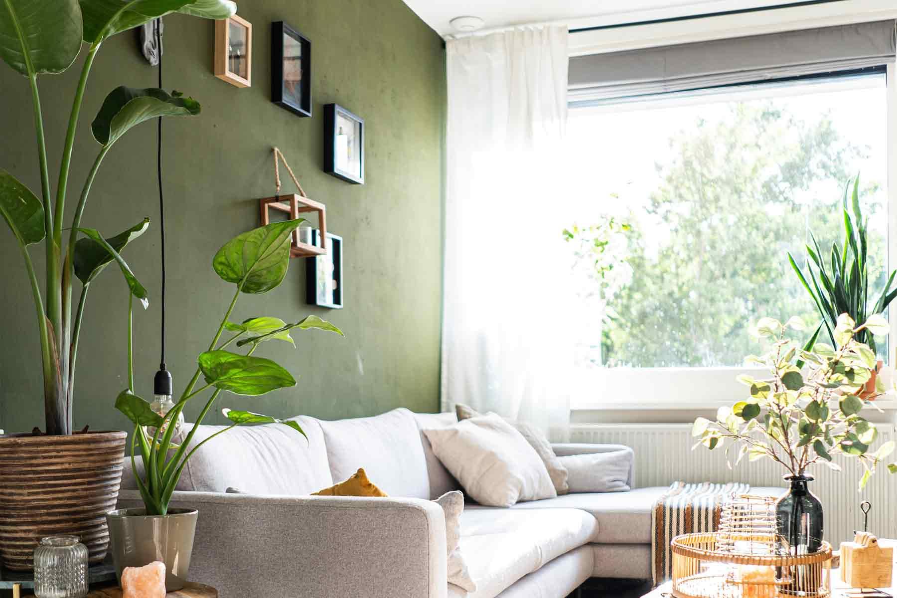 Dekorasi tanaman daun lebar untuk ruang tamu, foto oleh Jane Duursma, via unsplash.com