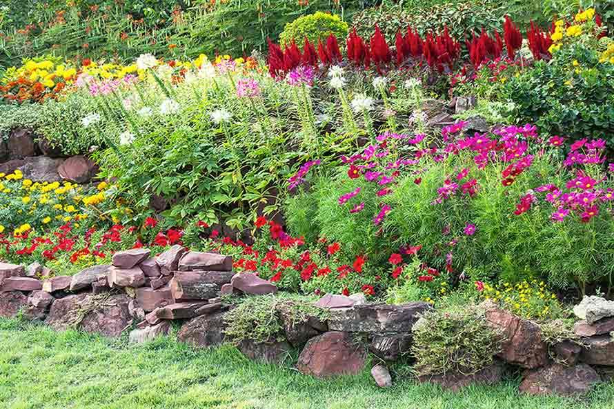 Taman bunga tampak rapi dengan deretan bebatuan, foto oleh Aopsan, via freepik.com